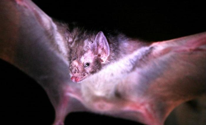 Adolescente que contraiu raiva humana, mordido por morcego, passou a ser considerado o segundo sobrevivente da doença no Brasil.