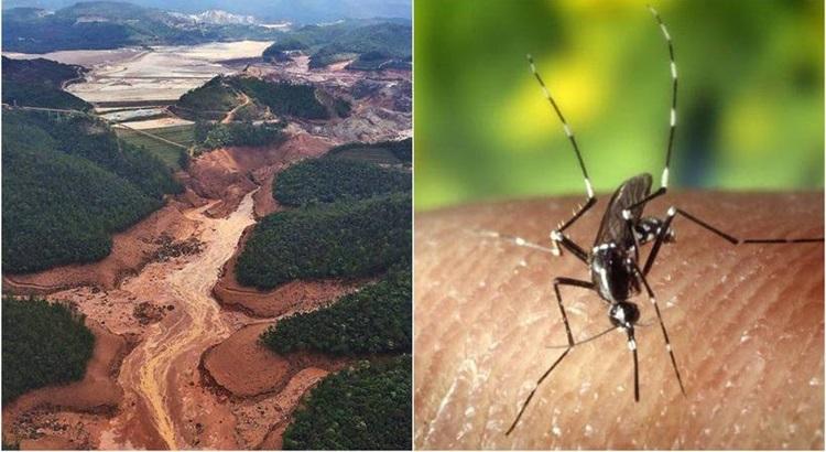 boato que corre desde o ano passado tem colocado também na conta do maior desastre socioambiental do Brasil a disseminação da febre amarela - Foto: Divulgação