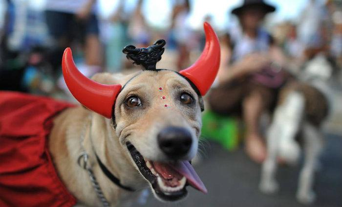Ao identificar quaisquer dessas alergias, o ideal é procurar um veterinário. Foto: Melhor Amigo Dog/Divulgação (Foto: Melhor Amigo Dog/Divulgação)