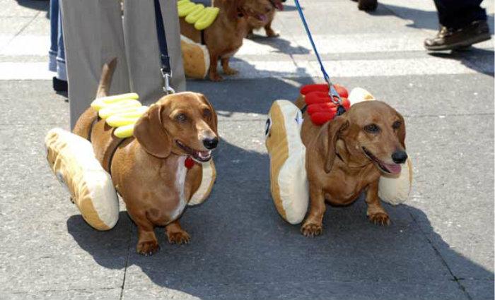 Foto: Melhor Amigo Dog/Divulgação (Foto: Melhor Amigo Dog/Divulgação)