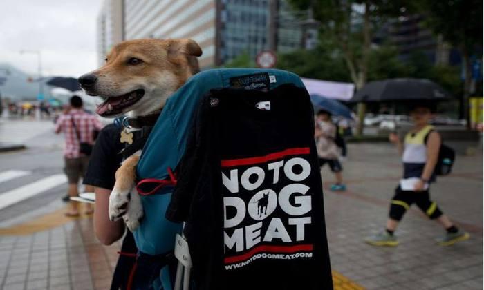 Ativistas protestam contra o consumo de carne de cachorro, com petições on-line querendo o boicote aos Jogos Olímpicos de Inverno de Pyeongchang-2018. Foto: Ed Jones/AFP