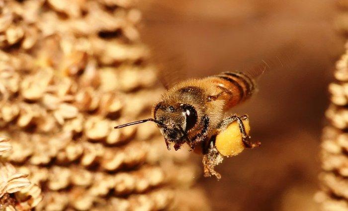 Segundo os bombeiros, as abelhas foram alvoroçadas por dois apicultores contratados para retirar a colmeia do local. Foto: Tânia Rêgo/Agência Brasil