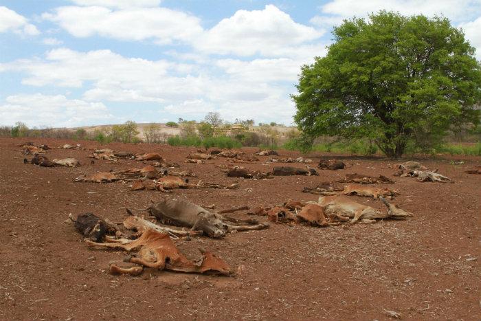O equipamento usa indicadores de secas que são consagradas em nível mundial e classifica a seca em classes de severidade. Foto: Teresa Maia/DP