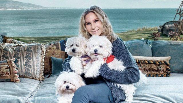 Cantora posou com animais de estimação. Foto: Russell James/Divulgação