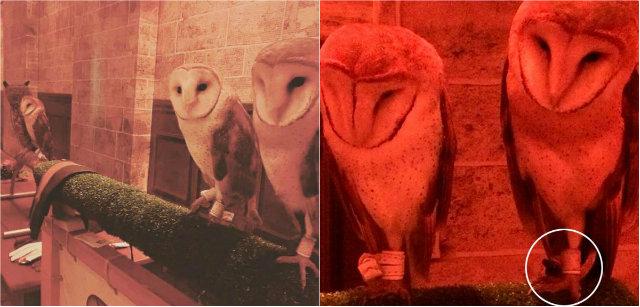 Imagens com as aves geraram comoção nas redes sociais. Fotos: Facebook/Reprodução