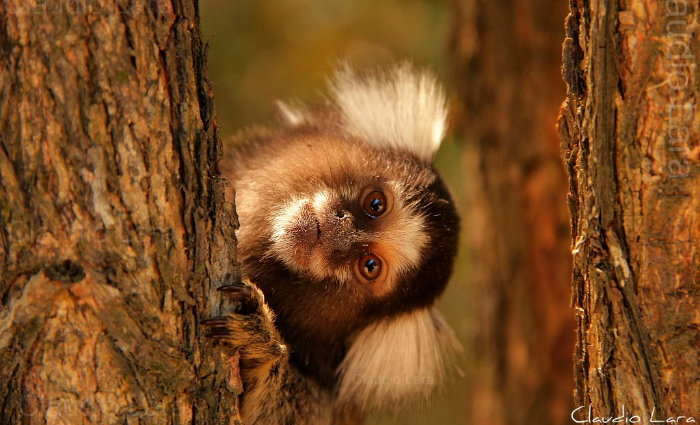 Várias mensagens se espalharam principalmente por grupos de WhatsApp apontando a necessidade de eliminar os macacos. Foto: Flickr