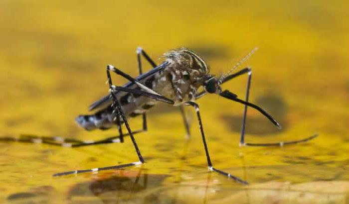 A febre amarela é uma doença sazonal. Foto: Rafael Neddermeyer/Fotos Públicas