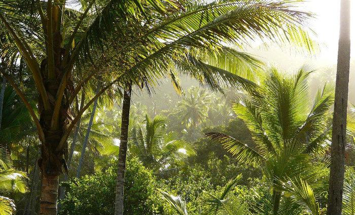 As mudas de até três metros de altura são de espécies como o ipê, caraibeira, pau-brasil, pau-ferro e amescla de cheiro. Foto: Wikimedia Commons/Reprodução