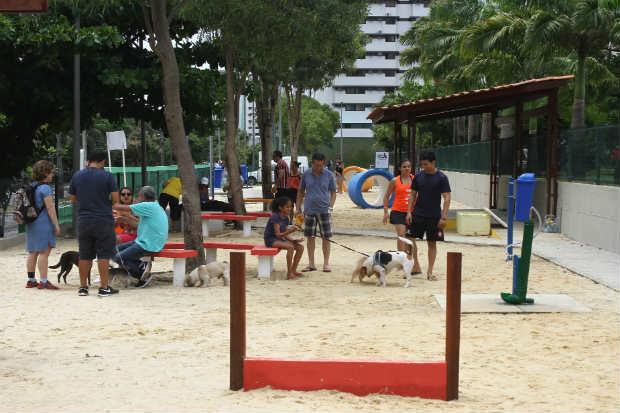 Resultado de imagem para recolher fezes dos bichos no Recife