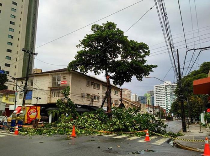 Por conta do incidente, o trecho está sem energia elétrica, uma vez que o galho danificou a fiação. Foto: Pedro Guedes/Instagram