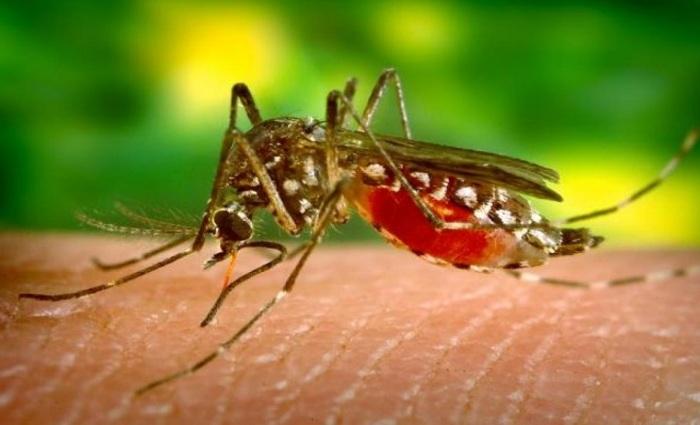 Até março, o País registrou 50 mil infecções. Foto: Reprodução/internet