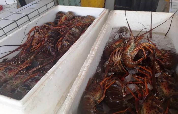 Os crustáceos serão doadas a uma instituição carente. Foto: CPRH/Divulgação