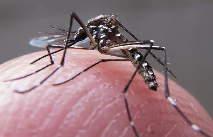 Tecnologia NIRS mostrou efetividade entre 94% e 99% na identificação de mosquitos infectados. Foto: Rafael Neddermeyer / Fotos Públicas