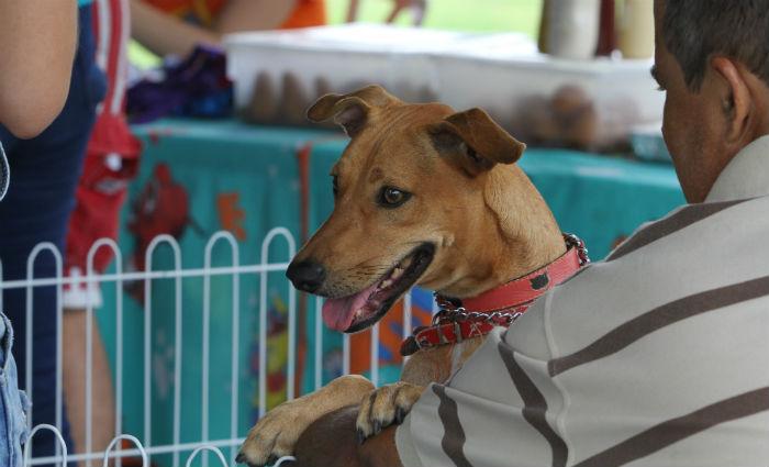 Estarão disponíveis para adoção cães e gatos adultos, todos castrados, vacinados, vermifugados. Foto: Nando Chiappetta/DP