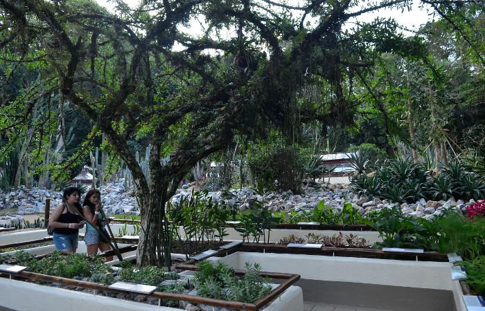 No fim de 2017, o local foi considerado pela Botanic Gardens Conservation International (BGCI) como a instituição botânica com o maior acervo exclusivo do mundo. Foto: Tomaz Silva/Agência Brasil