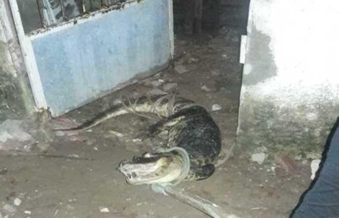 O animal estava na porta da casa. Foto: PMPE/Diculgação