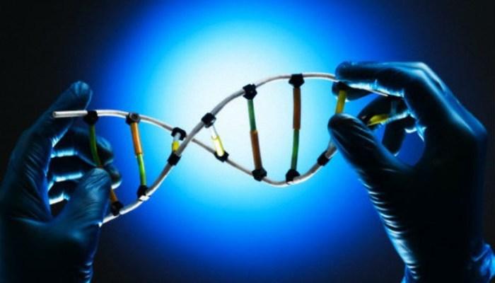 Método descrito no novo estudo permite editar as sequências do genoma nas células-T humanas sem utilizar os vírus. Foto: Reprodução/Internet