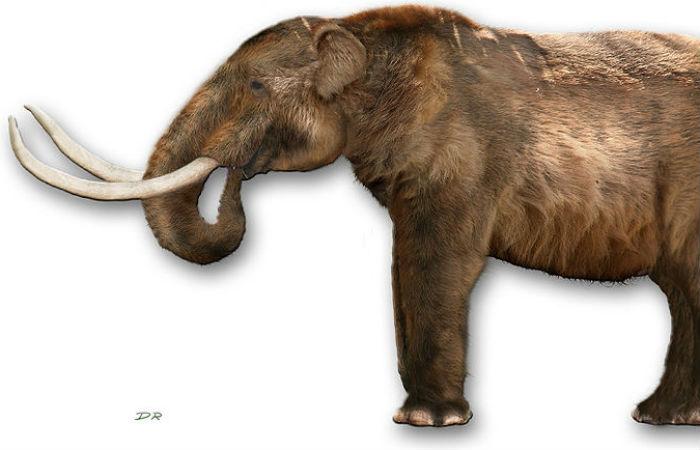 Reprodução de Mastodonte Foto: Dantheman9758 / Creative Commons