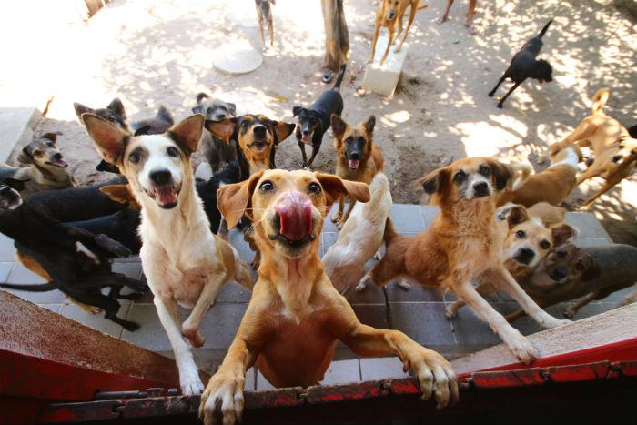 No total, 15 cães, castrados e vermifugados, resgatados pela ONG estarão para adoção. Foto: Karina Morais/Esp.DP.