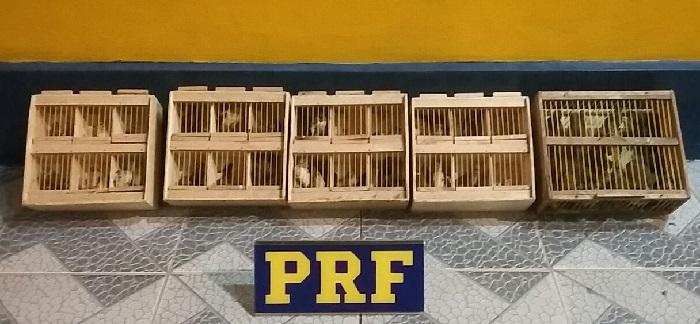 Aves foram resgatadas de transporte clandestino em Lajedo e encaminhadas para a CPRH. Foto: Jonas Vasconcelos-PRF/Divulgação