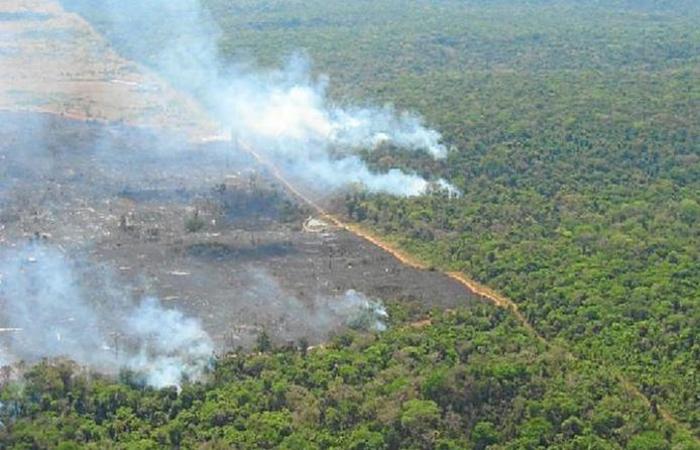 Apesar do aporte de R$ 3,1 bilhões realizado nesses 10 anos, desmatamento voltou a crescer na região. Foto: Daniel Nepstad/Divulgação
