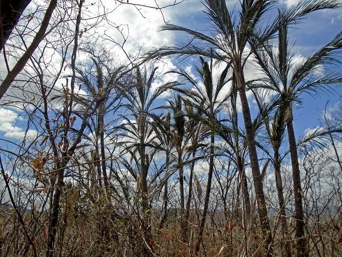 Imagens da diversidade ecológica da fauna e da flora da caatinga integram a exposição Olhares da Mata. Foto: Mirelly Ferreira/Divulgação