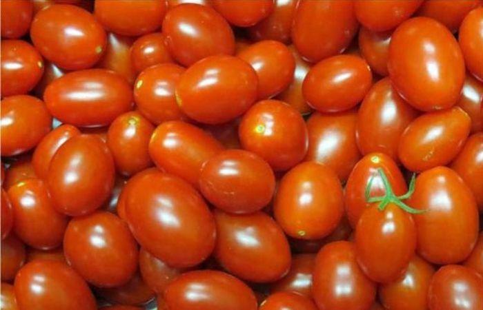 Os tomates desenvolvidos pela Embrapa chegam ao mercado por meio de uma parceria público-privada. Foto: Leandro Santos Lobo/Embrapa/Direitos reservados