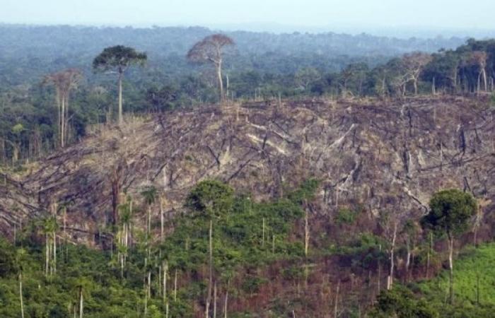 América Latina é uma das três regiões do mundo onde desmatamento persiste, diz FAO. Foto: AFP/Arquive