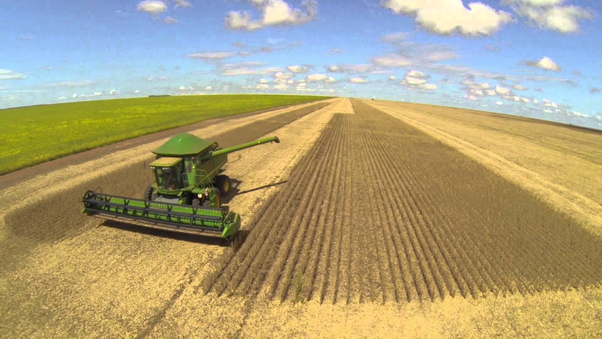 A previsão para a soja teve leve aumento em relação a junho. Foto: Reprodução/Internet