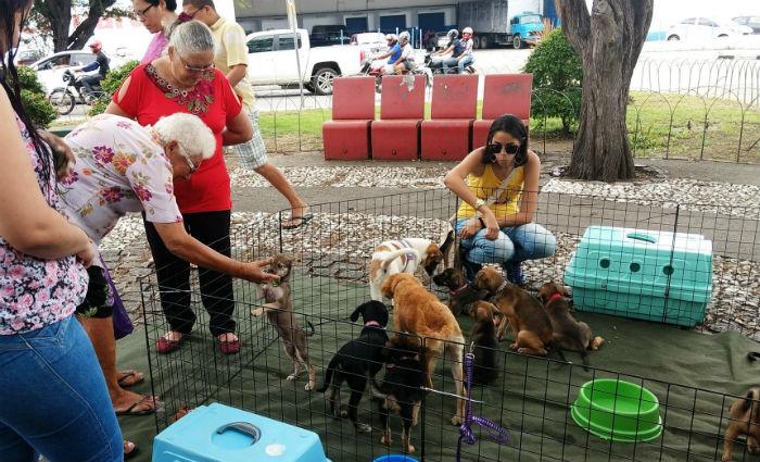 Ao todo, 30 animais, entre cães e gatos, adultos e filhotes, fêmeas e machos, serão disponibilizados no local. Crédito: Quatro Patas/Divulgação