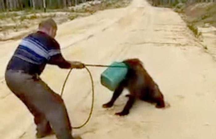 As autoridades de Yakutia foram acionadas para dar proseguimento às buscas pelo urso. Foto: Reprodução/Vídeo