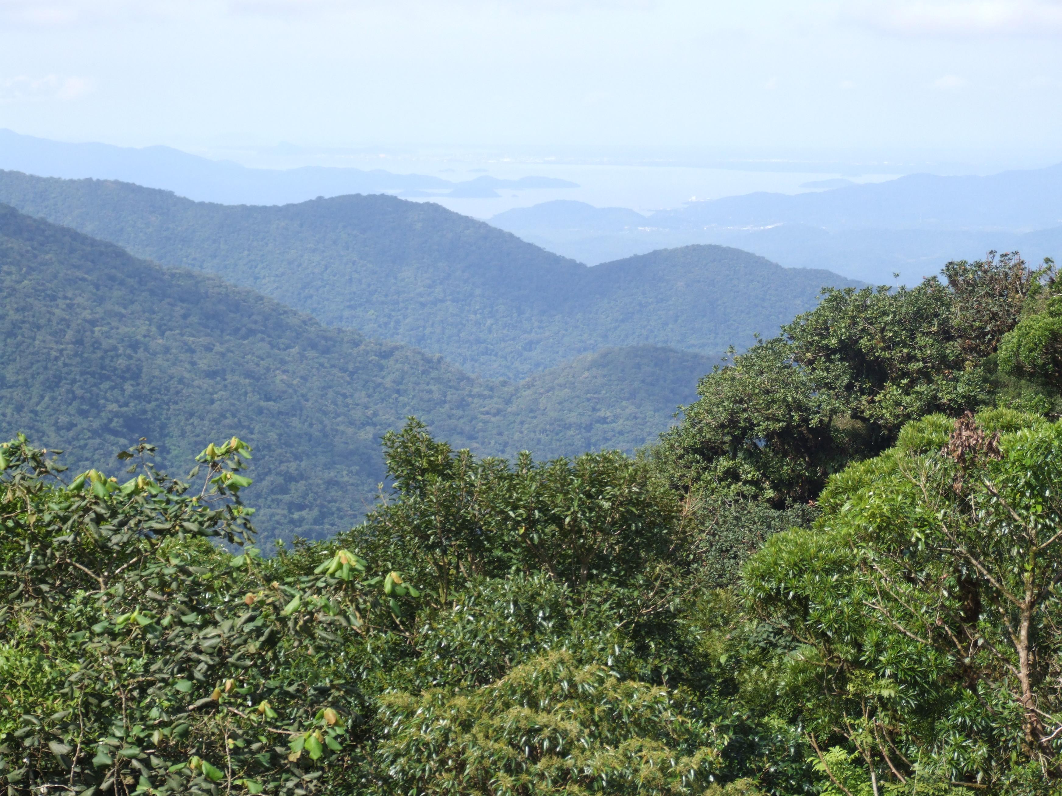 O bioma da Mata Atlântica está presente em 17 Estados brasileiros e cobre cerca de 13% do território nacional. Foto: Reprodução / Wikipedia
