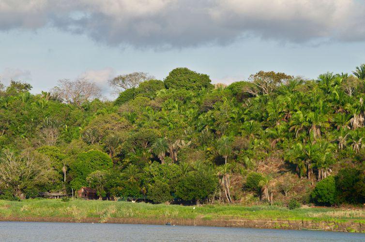 Floresta na Amazônia. Foto: Thiago Silva/ Fapesp/Direitos Reservados