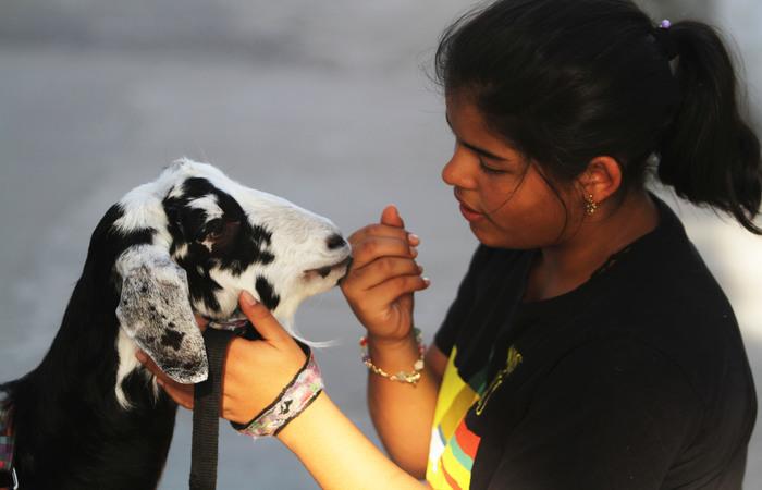 """Julieth, 13 anos, é tida como a """"mãe"""" de Cremosa e guarda muitas fotos e até o umbigo do animal. Foto: Nando Chiappetta/DP"""