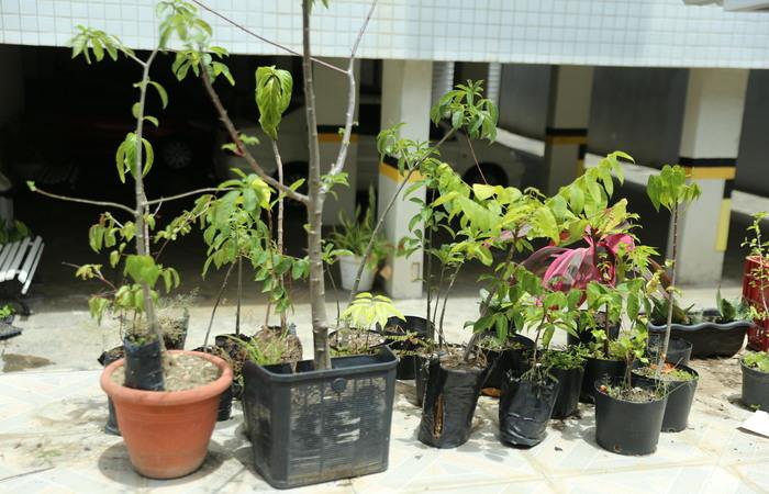 Só este ano, os moradores já plantaram 11 espécies. Foto: Camila Pifano/Esp. DP.