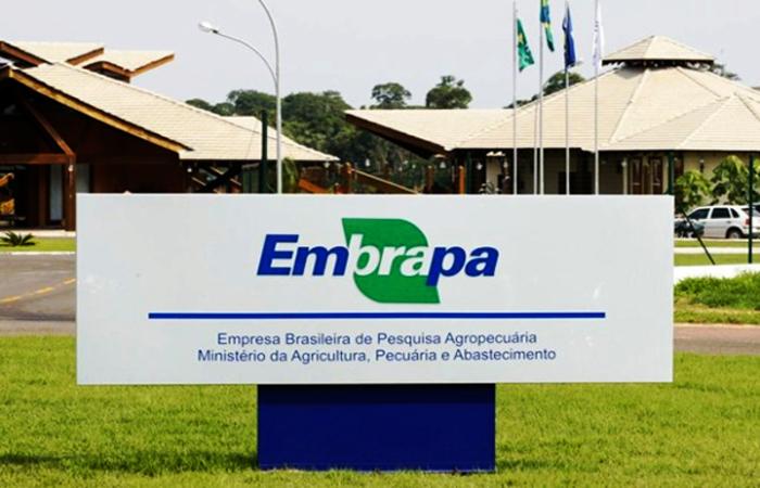 Foto: Divulgação / Embrapa