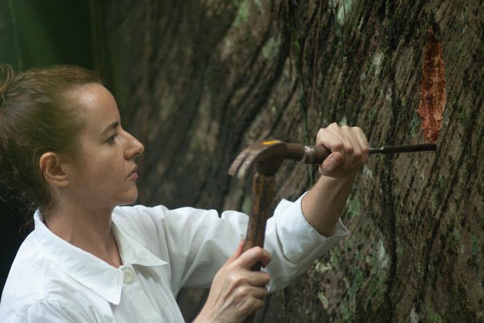 A samaúma, que no tupi significa grande árvore, é tida pelos povos indígenas da região como a 'Mãe Sagrada da Floresta'. Foto: Itaú Cultural/Divulgação