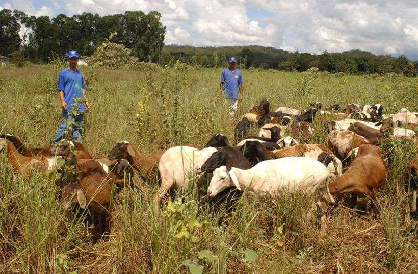 Atualmente, apenas 50 abatedores brasileiros podem exportar carne bovina para a Europa. Foto: Carlos Vieira/CB/D.A Press