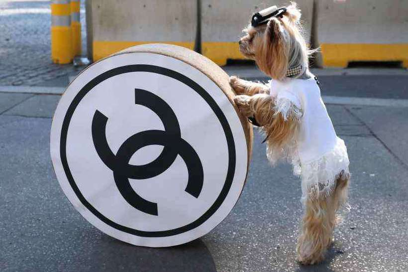 A associação de direitos dos animais Peta aplaudiu a medida. Foto: AFP