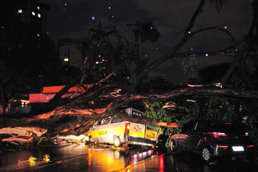Uma árvore de grande porte caiu e atingiu ao menos três veículos. O motorista de uma van morreu. Foto: Marcos Vieira/EM/D.A press