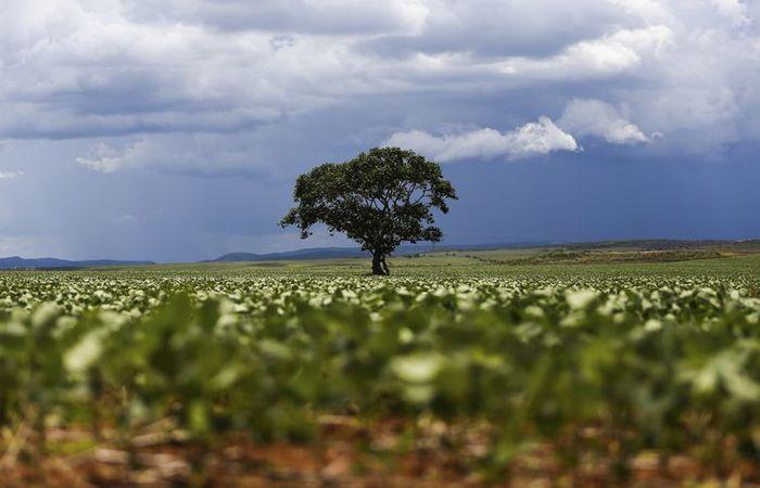 Plantação de soja. Foto: Marcelo Camargo/Agência Brasil (Foto: Marcelo Camargo/Agência Brasil)