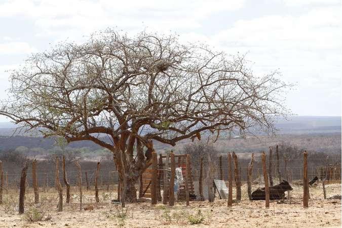 Problemas históricos, como a seca, que minam a dignidade da população, precisam entrar na lista de prioridades do novo governo. Foto: Ricardo Fernandes/DP