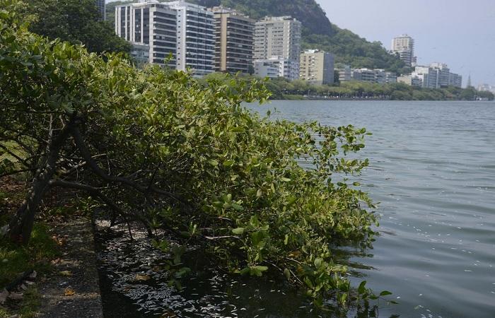 Até às 11h deste domingo, cerca de 90 toneladas haviam sido retiradas da lagoa. Foto: Tânia Rego/Agência Brasil