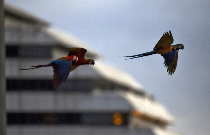 (Yuri Cortez / AFP)