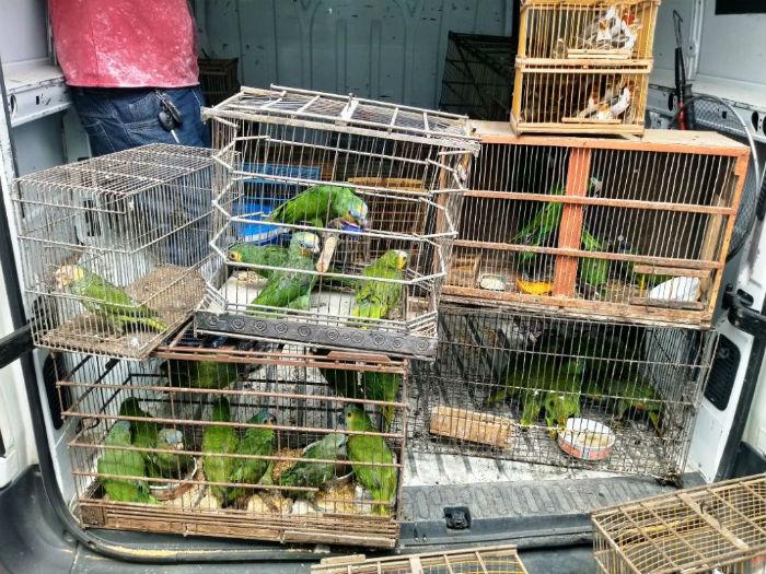 O número de solturas, quando os animais são devolvidos ao habitat foi de 6.819 em 2018. Foto: CPRH/Divulgação.
