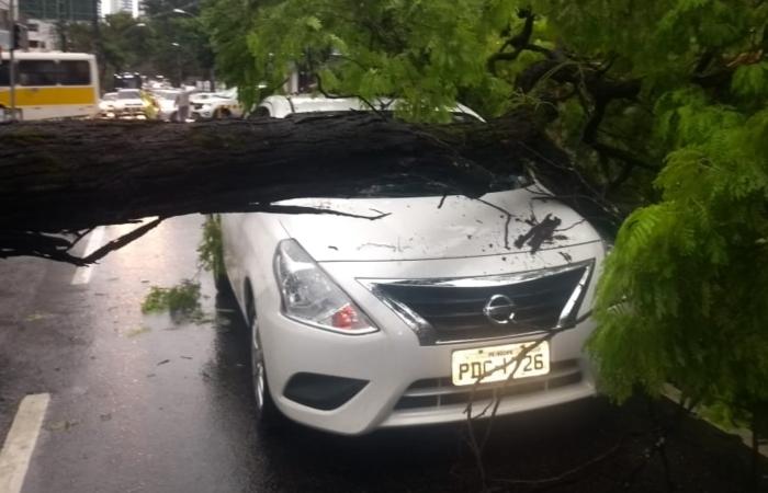 Na foto, árvore que atingiu um veículo na Avenida Rui Barbosa. Foto: Cortesia. (Na foto, árvore que atingiu um veículo na Avenida Rui Barbosa. Foto: Cortesia.)