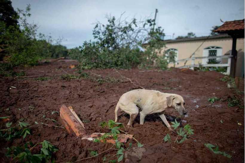 A Vale montou uma central de alimentação e medicação, que estará disponível enquanto os animais estiveram abrigados. Foto: Mauro Pimentel/AFP