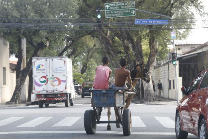 As carroças só poderão circular em ruas com menor fluxo de veículos. Foto: Ricardo Fernandes/DP.