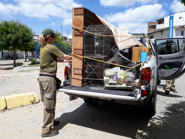 Espécies ameaçadas de extinção estão dentre os animais resgatados. Foto: Divulgação.
