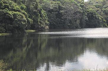 Secretaria de Meio Ambiente quer resguardar 35 mil hectares em três municípios da Mata Norte (Sema/Divulgação)